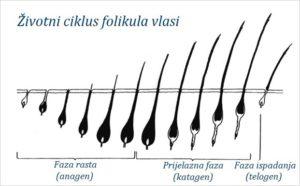 Životni ciklus kose